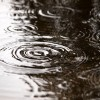 ダニ対策!梅雨の季節にハウスダスト増加を防ぐには?
