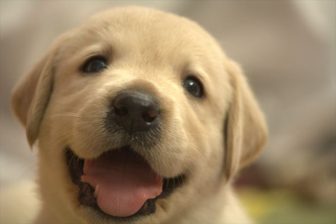 犬 玉ねぎ食べたらどうなる (2)