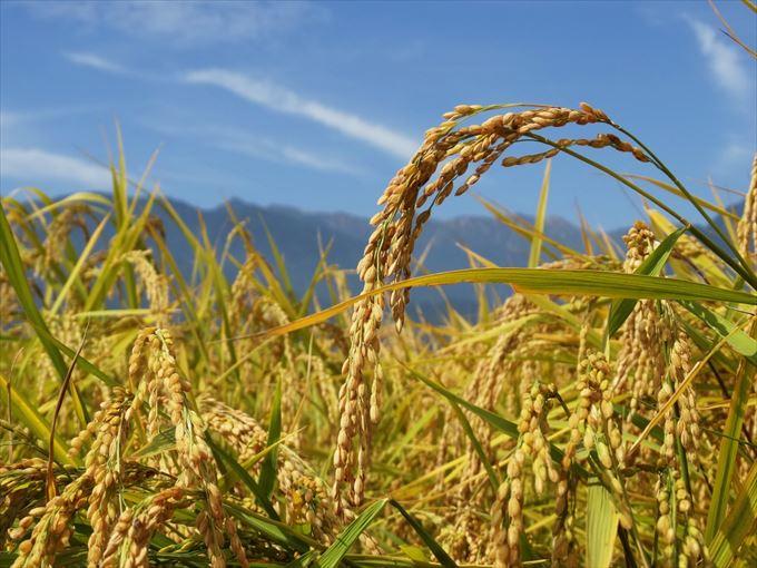 無洗米 炊き方 水の量 (3)