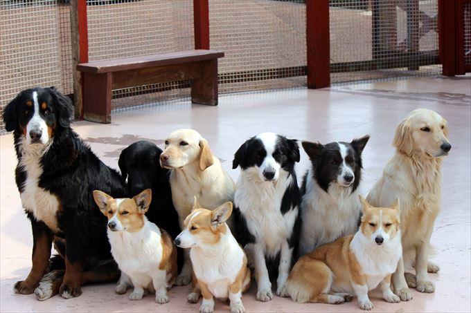 犬 玉ねぎ食べたらどうなる (1)