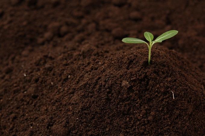 コーヒー かす 肥料