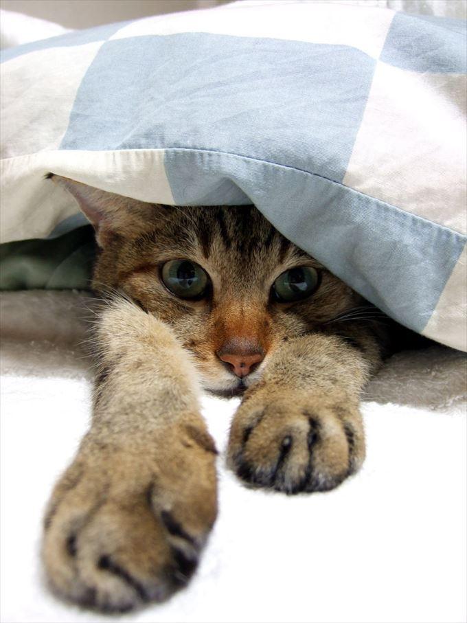 寝坊 病気
