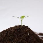 とぎ汁肥料の効果を引き出す使い方とは?チッ素飢餓にご注意!