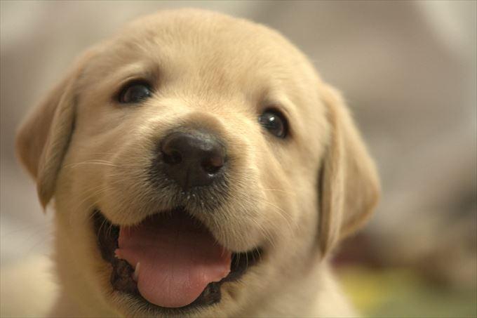 犬 熱中症 食べ物 (1)_R