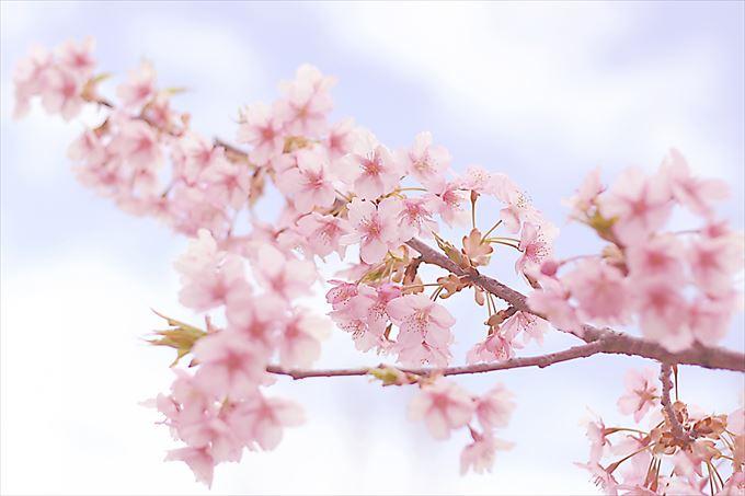 お花見 場所取り マナー (1)_R