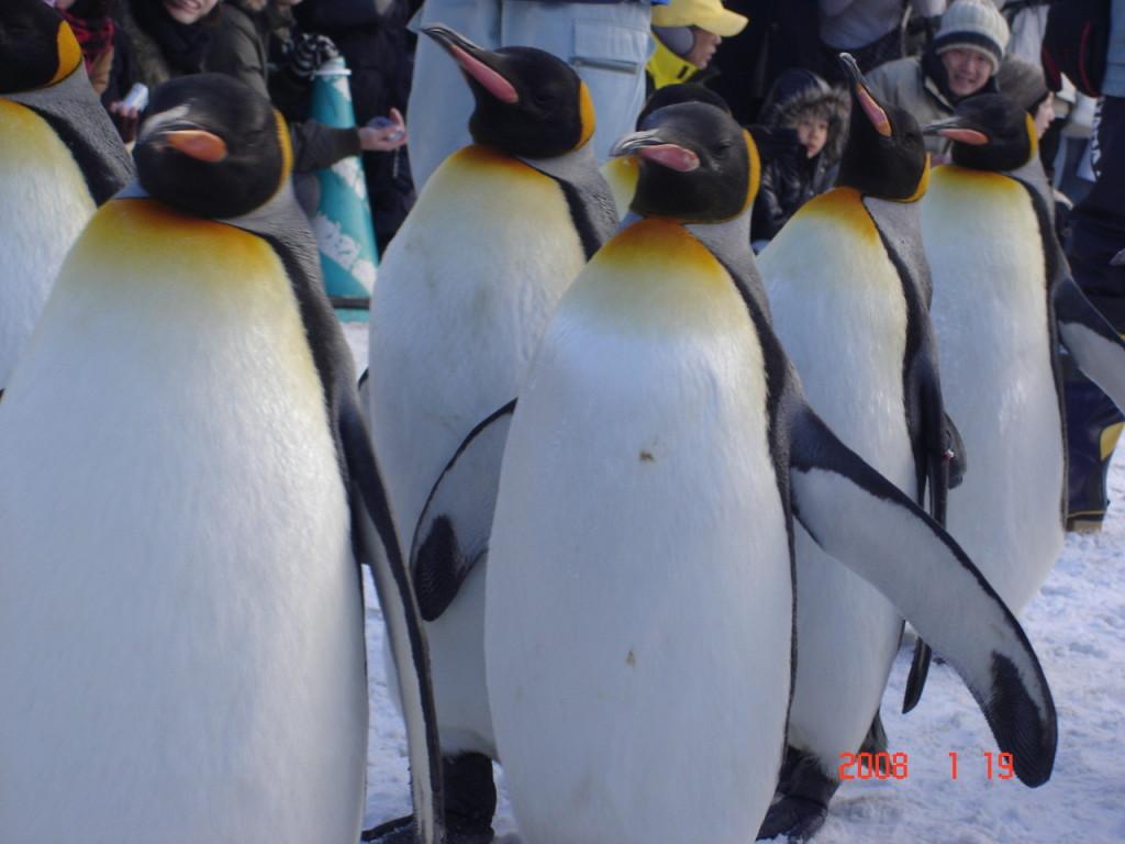 ペンギン 歩き方 滑らない (1)